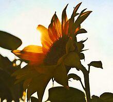 I'd Send You A Flower - A Sunflower Bright by Denise Abé