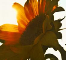 I'd Send You A Flower - A Sunflower Bright Sticker