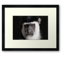 Monkey tales Framed Print