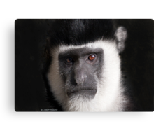 Monkey tales Canvas Print