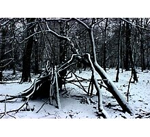 Snowy Hideout Photographic Print