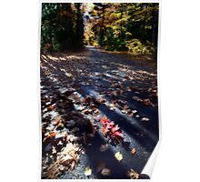 Autumn Trees fall Michigan colors beautiful red orange Poster