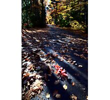 Autumn Trees fall Michigan colors beautiful red orange Photographic Print