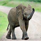 THE AFRICAN ELEPHANT – Loxodonta Africana - AFRIKA OLIFANT by Magaret Meintjes