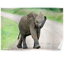 THE AFRICAN ELEPHANT – Loxodonta Africana - AFRIKA OLIFANT Poster