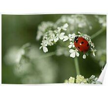 Ladybug & Hemlock Poster