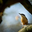 Nuthatch by Sarah Walters