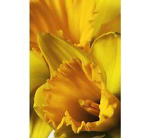 Pocketful of Sunshine Photographic Print
