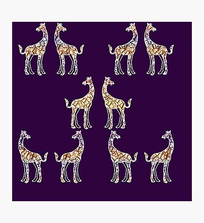 Reticulated Laughing Giraffe Photographic Print