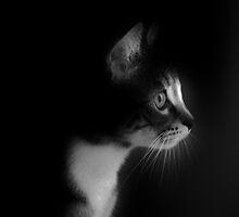 Kitten Face by Ladymoose