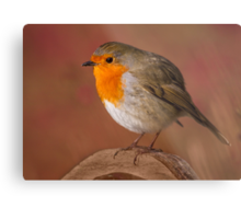 Red Robin Metal Print