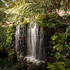 Madeiran Falls  by George Davidson