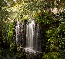 Madeiran Falls  by Georden