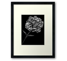 Flower 8 Framed Print