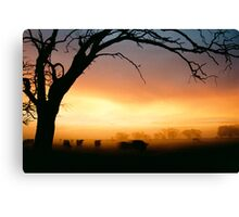 Cows grazing in the morning mist - Tongala - Victoria, Australia Canvas Print