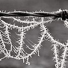 Frozen Spikes - Tongala - Victoria - Australia by Norman Repacholi