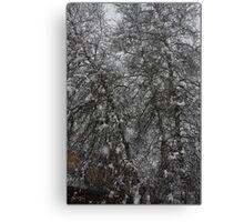 Grey Birch Details in a Snowstorm Canvas Print