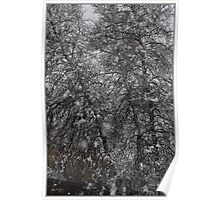 Grey Birch Details in a Snowstorm Poster