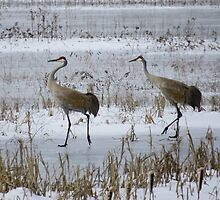 Sandhill Crane with Curved Neck by Deb Fedeler