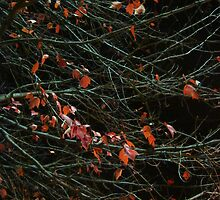 Leaves By Night by Guy Ricketts