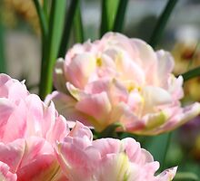 Pink Tulip Flowers Spring Tulips art prints by BasleeArtPrints