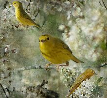 My Little Warblers Three by Crista Peacey