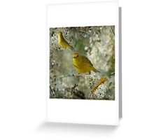 My Little Warblers Three Greeting Card