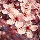 Spring Tree Blossoms Pink art prints Floral by BasleeArtPrints
