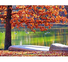 Geese on the Lake Photographic Print