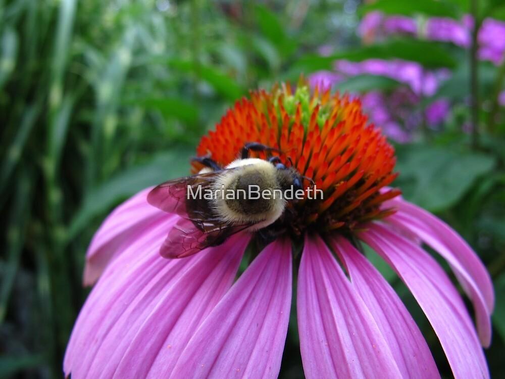 Bee Sommalier by MarianBendeth