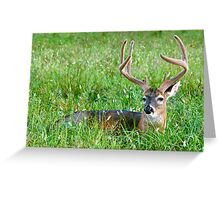 Lounging Buck Greeting Card