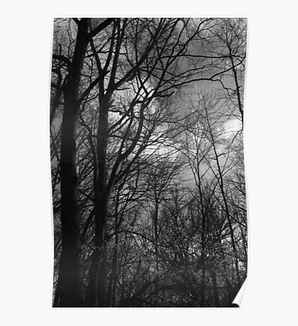 Spring Trees 19 Black and White Poster