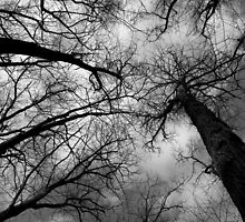 Tall Trees in Spring 10 Black and White by marybedy