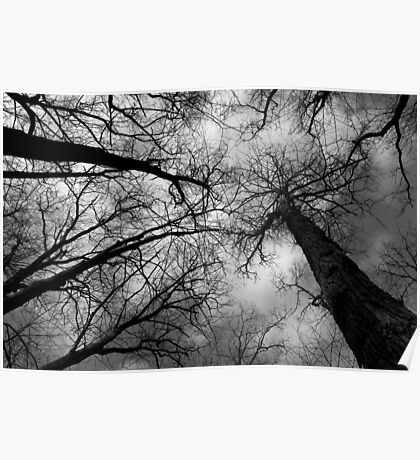 Tall Trees in Spring 10 Black and White Poster