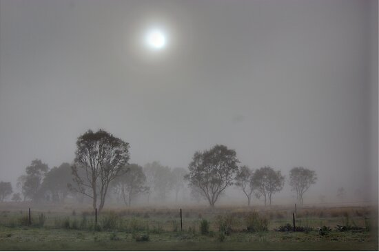 Breaking Through,  Rural NSW  by Kym Bradley