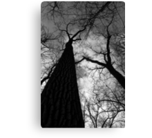 Tall Trees in Spring Black and White Canvas Print