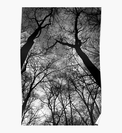 Looking Up Black and White Poster