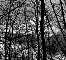 Waiting for Spring 13 Black and White by marybedy