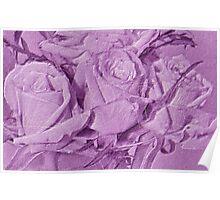 Lavender Love Roses Poster