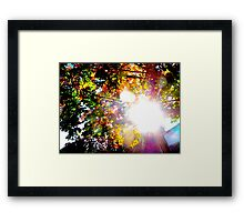 Autumn rays Framed Print