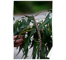 Monster Stick Insect Poster