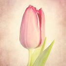 Happy Spring by KBritt