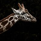 Sticking your neck out by John Conway