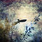 Freedom 'Wingham' by Matthew Jones