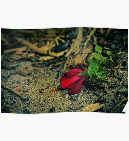 Single Red Flower Poster