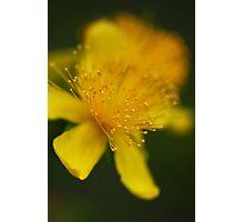 Soft focus Photographic Print