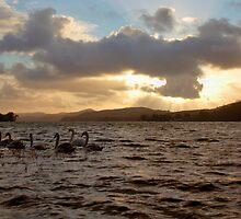 Swan Lake by J Biggadike