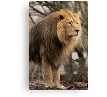 Lion Guard Canvas Print