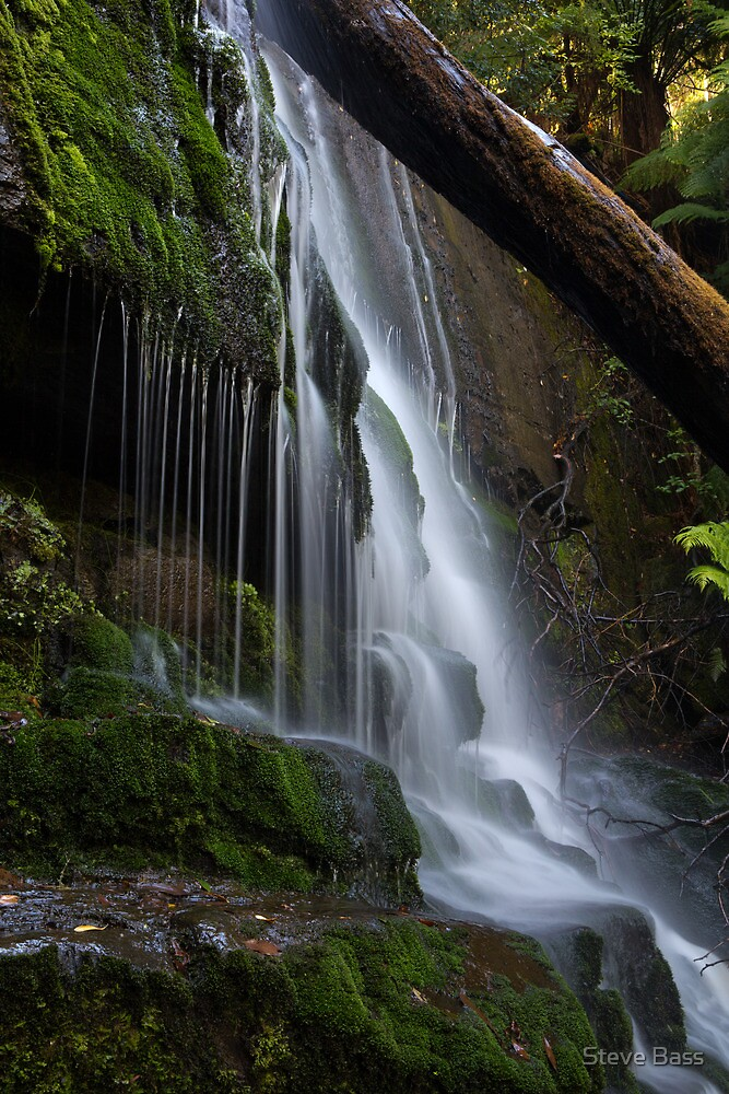 Pencil Pine Falls - Cradle Mountain National Park by Steve Bass