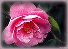 Tickled Pink by naturelover